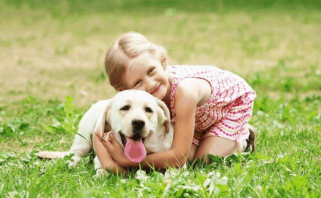 11 Home remédios para prevenção de dirofilariose em cães
