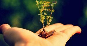 28 Maneiras simples e fáceis para ajudar o meio ambiente estão expostos