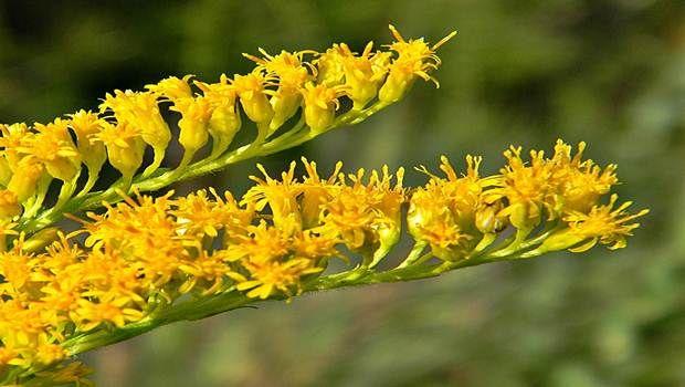 Top 20 naturais rim limpeza ervas, alimentos e bebidas